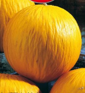MELON boule d'or Pqt  25 g