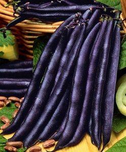 HARICOT NAIN Purple Queen gousse violette pqt 1 kg