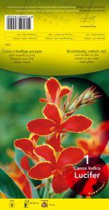 CANNA Lucifer nain jaune et rouge Pochette - code B