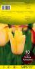 TULIPE FOSTERIANA 12+  Yellow purissima jaune   Pochette de 10 - code D