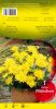 DAHLIA BORDER Munchen cactus jaune Pochette - code A