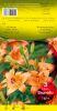 LILIUM Brunello orange pur Pochette de 3 - code D
