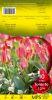 TULIPE PLURIFLORE 12+ Toronto rose    Pochette de 10 - code D