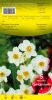 NARCISSE Géranium blanc et orange     Pochette de 5 - code D