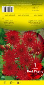 DAHLIA BORDER Red Pigmy cactus rouge Pochette - code A